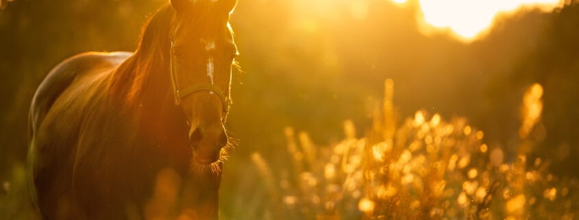 equine insurance california